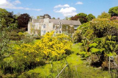 Hedgeley Hall Open Garden