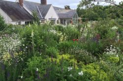Red Cross open garden days in North East England