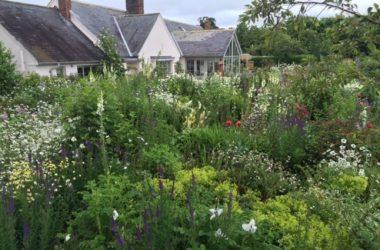 Kinky Cottage open garden day