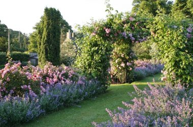 Lilburn Tower Open Gardens