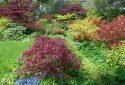 Polemonium Plantery Open Garden