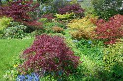 Polemonium Plantery Open Garden Day