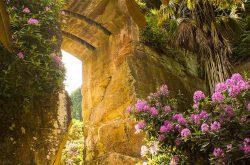 Explore Northumberland gardens