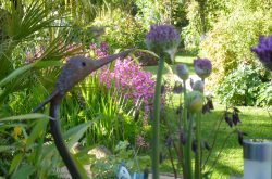 NGS open garden days in North East England