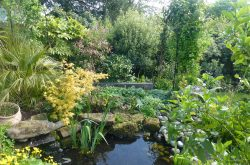 Woodlands NGS open garden